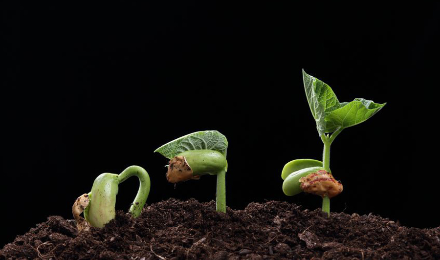 Planting Good Seed in the Ground